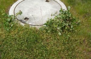Wie wirkt Banvel M im Rasen als Unkrautvernichter