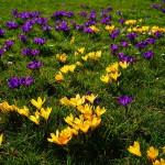 Rasendünger im Frühjahr ausbringen