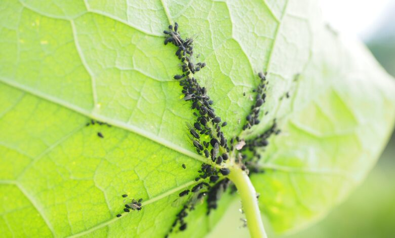 Mittel gegen Blattläuse