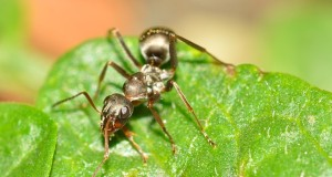 Ameisen im Rasen bekämpfen - so haben Sie Erfolg!