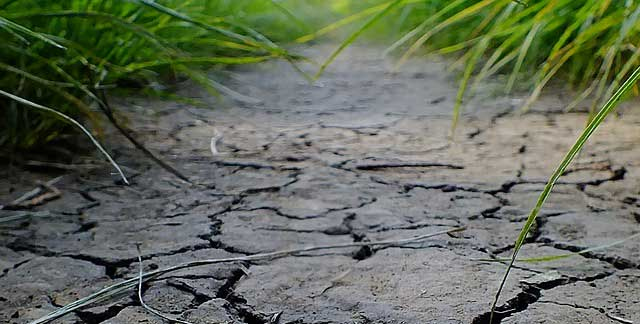 Bodenaktivator Test - Ausgelaugte Böden wieder fit machen