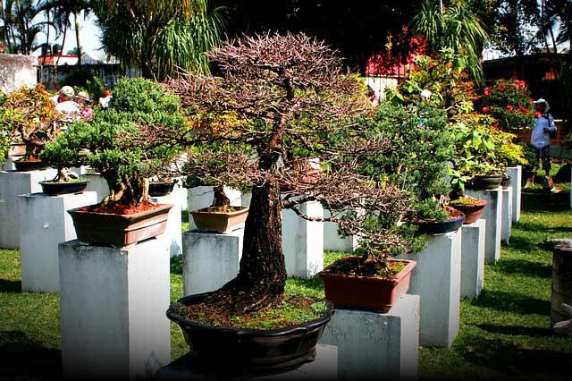 Einen bonsai garten anlegen for Garten planen mit bonsai acer