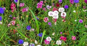 Buntes Ziergras für den Garten