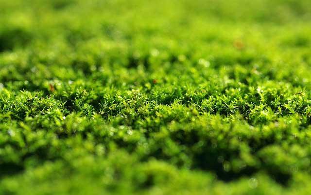 Compo Rasen Moos Frei Herbistop Test - Moos wird schnell bekämpft