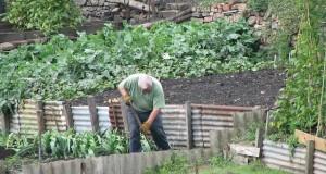 Was darf ein Mieter im Garten