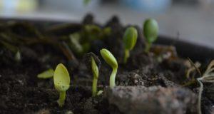 Pflanzen richtig düngen - Informatives über Produkte, Mengen und Zeitplanung