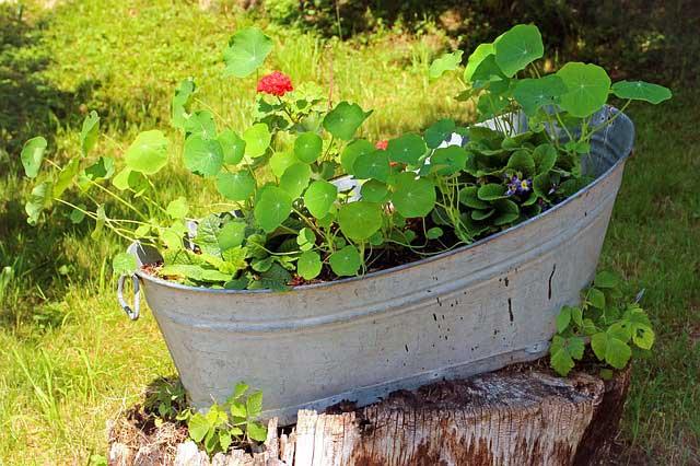 So können Kübelpflanzen überwintern