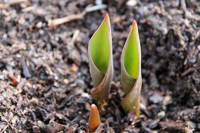 Mulchen als Bodenpflege: Der Mulch macht's