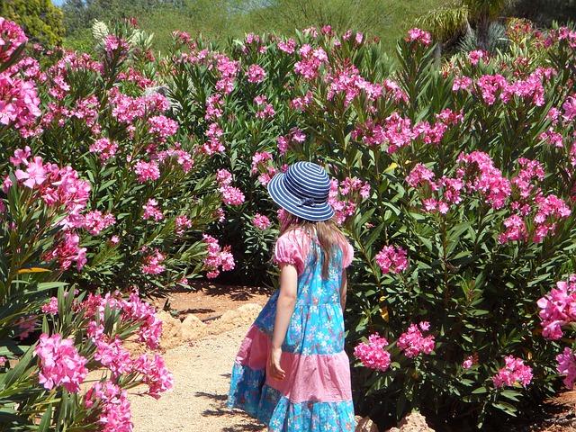 Oleander schneiden gehört zur Oleander Pflege