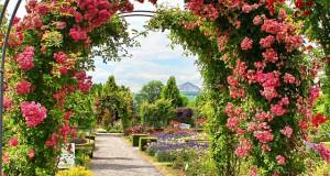 Rankgitter für den Garten