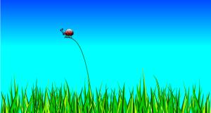 Wie Rasen säen ? Anleitung mit Zeitpunkt und Nachsaat Tipp