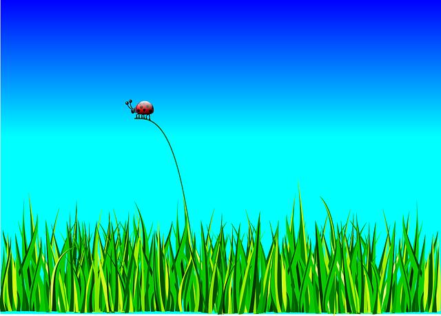 Rasen säen Anleitung