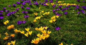 Rasendünger im Frühjahr