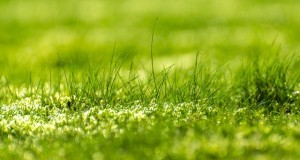 Rasendünger ausbringen - 6 Tipps als optimale Anleitung