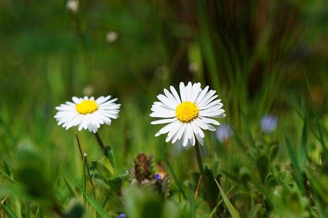 Rasendünger mit Unkrautvernichter - Das erste Substrat der Rasenpflege im Frühjahr