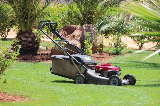 Zur perfekten Rasenpflege gehört die korrekt eingestellte Schnitthöhe beim Rasen mähen.