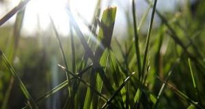 Rasensamen Test - Finden Sie das passende Saatgut für Neu- und Nachsaat