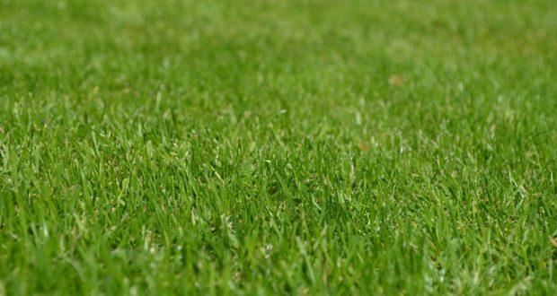 Unkrautwuchs im Rasen vorbeugen - 7 Pflegetipps für schöne Grünflächen