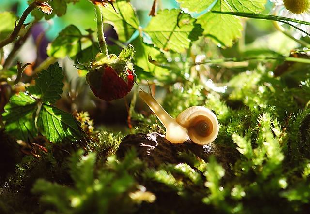 Mit Schneckenkorn wirksam gegen Schnecken im Garten vorgehen