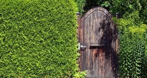 Anlegen einer Sichtschutzhecke im Garten