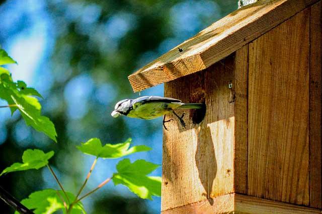 Das Vogelhaus als Futterplatz